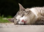 soleil chat.jpg